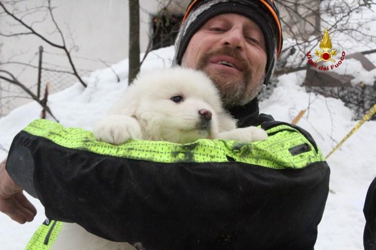 Perros rescatados en Italia