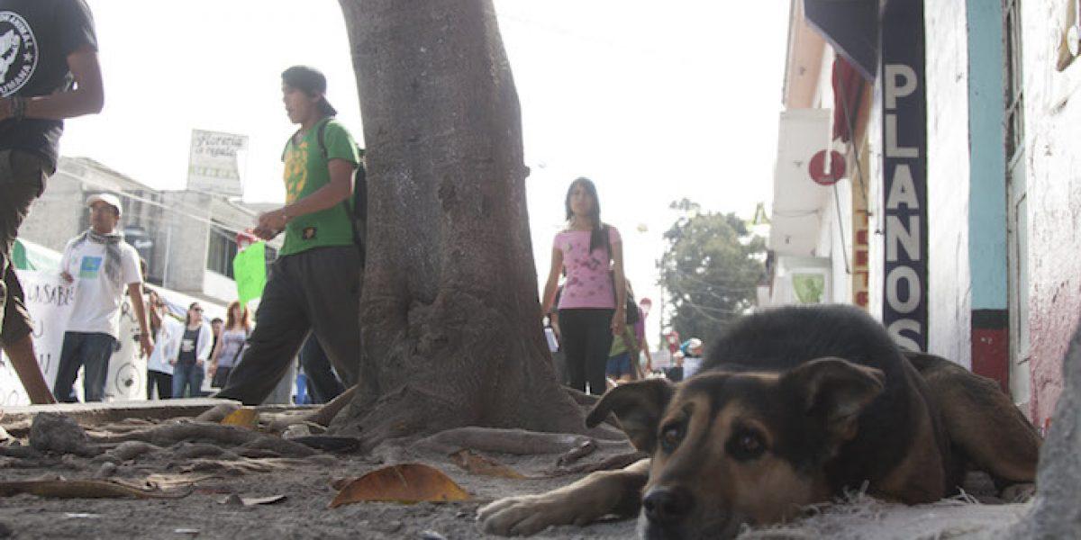 Zoofilia en México