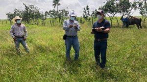 MAGA verifica langosta voladora en Petén