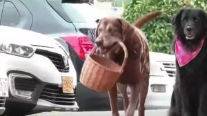 Eros, perrito que reparte compras en Medellín