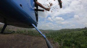 Lluvia de semillas en la Reserva de la Biosfera Maya