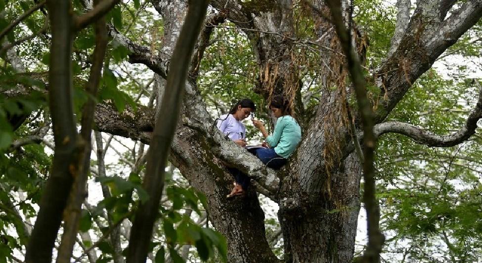 Hermanas se suben a un árbol para poder recibir clases en línea