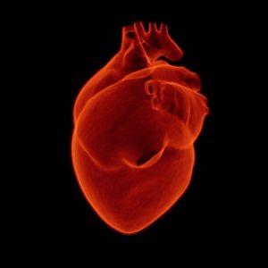 Representación del corazón humano