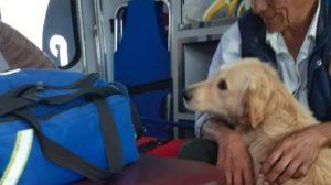 Perro acompaña a su dueño en la ambulancia
