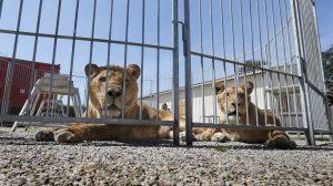 Animales salvajes en cautiverio