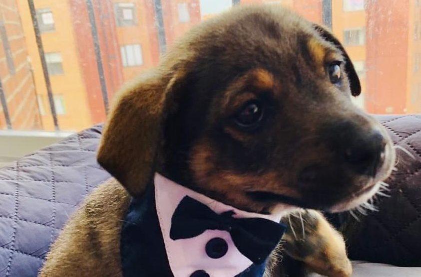 """""""Vicente"""", perrito al que dejaron plantado el día de su adopción"""