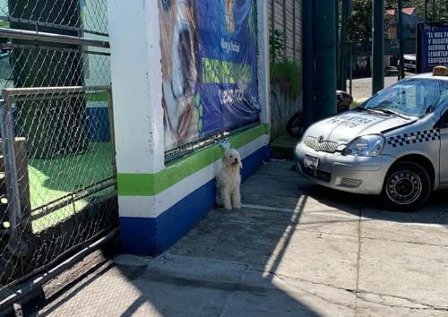 Perra abandonada en Mixco
