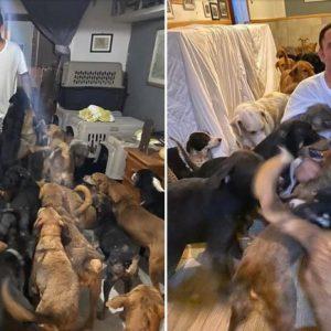 Ricardo Pimentel Cordero le da refugio a perritos callejeros en Cancún