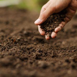 Tierra en las manos