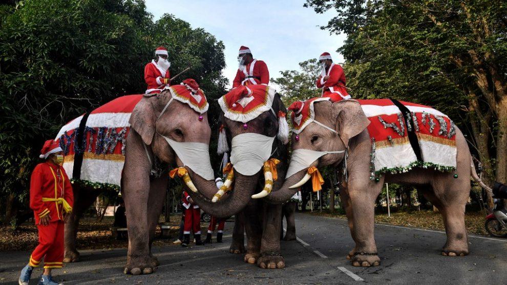 Elefantes disfrazados de Santa Claus reparten mascarillas en Tailandia
