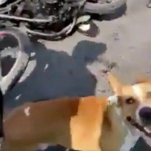 Propinan golpiza a presunto ladrón; se les une un perrito