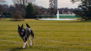 Perros de Joe Biden en la Casa Blanca