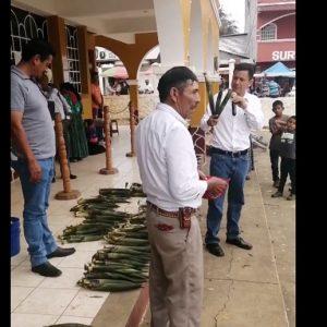 Recaudan dinero en la Municipalidad de Chisec para ayudar a detenidos por extraer pacayas