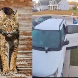 VIDEO. Hombre salva a su esposa de un salvaje felino con rabia