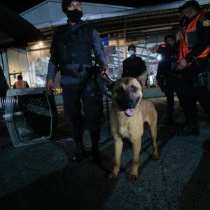 Perros policías acudirán a operativos contra redes del crimen organizado.