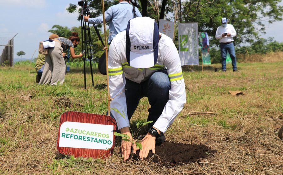 Asociación de Azucareros de Guatemala sembrará 900 mil árboles
