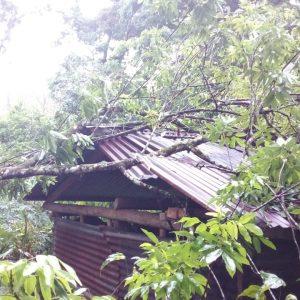 Se registra caída de árboles en Alta Verapaz