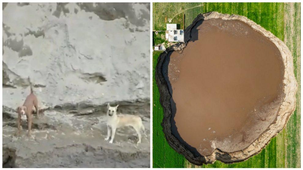 Rescatan a perritos que cayeron a socavón gigante en Puebla, México